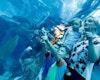 Dubai Aquarium, Dubai Aquarium and Underwater Zoo,  Dubai Aquarium & Underwater Zoo Experience in dubai